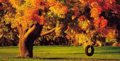 fondo-árbol-con-columpio
